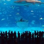 """微软与海洋公园推""""IE9鱼乐无穷体验"""""""