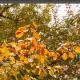 lightroom树叶变红技巧分享